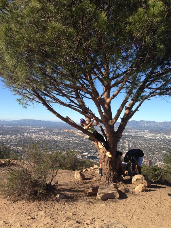 Wisdom Tree.